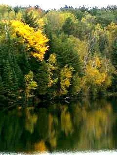 Au Sable River Fall Photo on Cooke Dam Pond