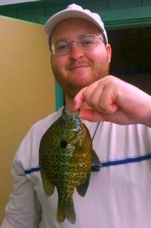 Big Pumpkinseed Sunfish at Spawning Time